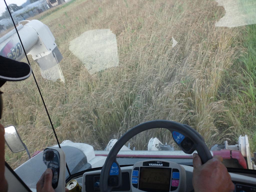 麦刈り 車内