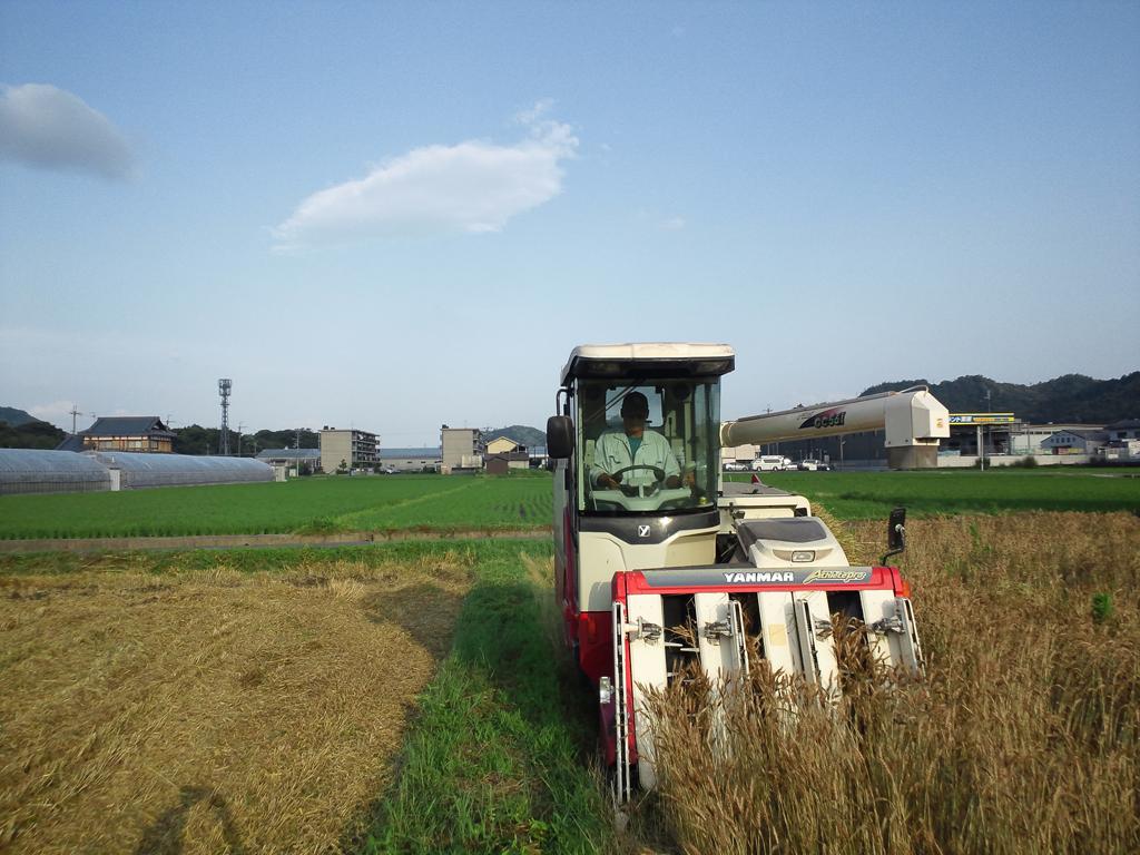 麦刈り風景