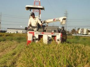 稲刈り ボス