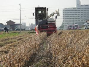 大豆刈り(前から)