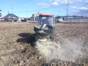 春に向けて肥料まきです。