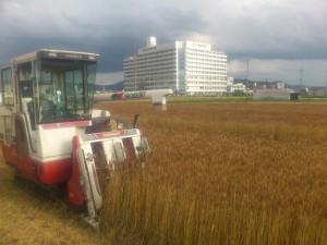 26年麦刈り