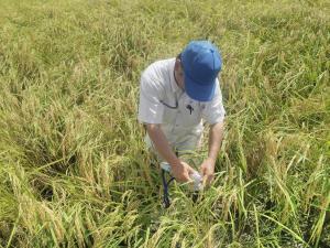 稲の品質測定