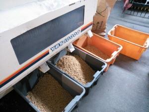 大豆の選別 1