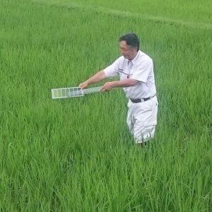 稲の葉色鑑定