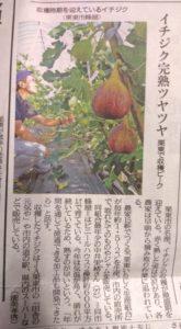 京都新聞掲載いちじく