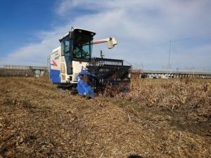 2016大豆の収穫