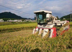 2017年稲刈り開始