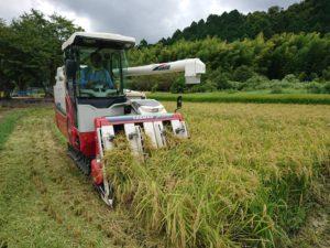 稲刈り 2018