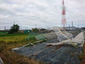 台風につぶされたビニールハウス